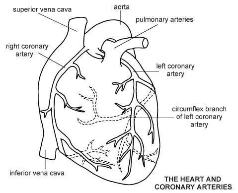 Heart coronary arteries diagram patient related information heart coronary artery bypass diagram ccuart Gallery