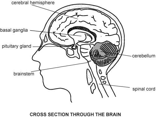 Brain cross section diagram patient brain cross section diagram ccuart Gallery