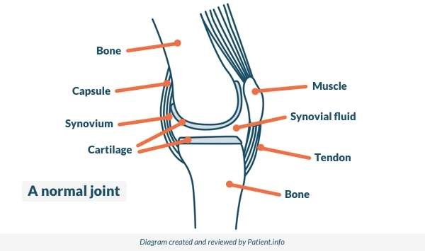 Normal joint