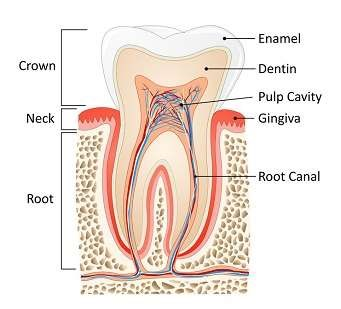 Root canal Toothpick image